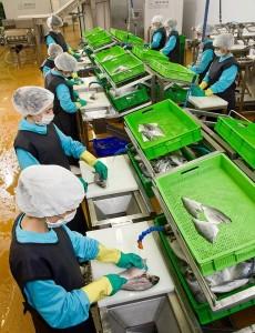бизнес на рыбе