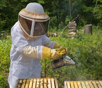 налогообложение на пчеловодство