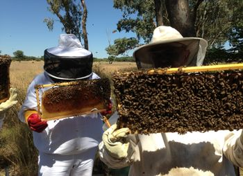 обучение пчеловодству